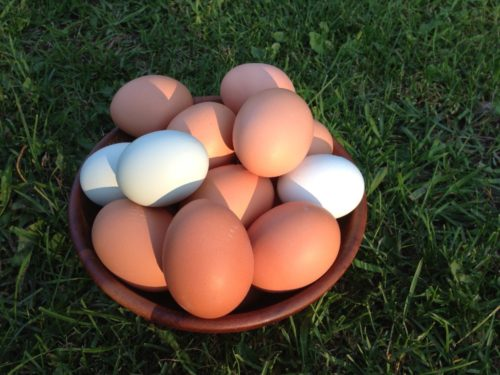 Organic Fed Free Range Farm Fresh Brown Eggs