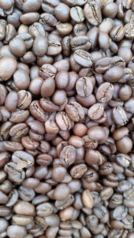 Freshly roasted beans