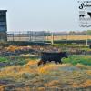 schielke farm (3)